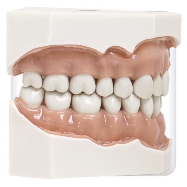 Модель верхней и нижней челюсти с 32 зубами для работы с турбинным наконечником
