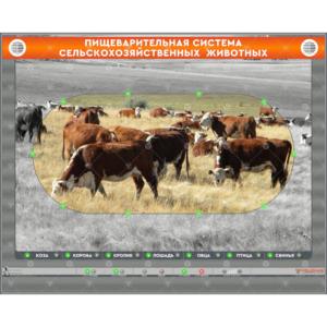 """Электрифицированный стенд """"Пищеварительная система сельскохозяйственных животных"""" (со сменными панелями)"""