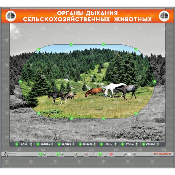"""Электрифицированный стенд """"Органы дыхания сельскохозяйственных животных"""" (со сменными панелями)"""
