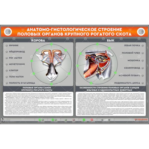 """Электрифицированный стенд """"Анатомо-гистологическое строение половых органов крупного рогатого скота"""""""