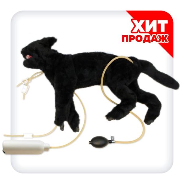 Тренажер для отработки навыков СЛР у кошек