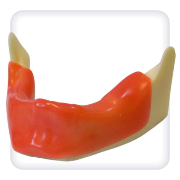 Модель нижней челюсти для имплантологии