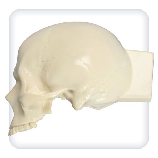 Модель черепа для отработки навыков трепанации