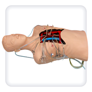Муляж открытой грудной клетки с имитацией сосудов венозного и артериального сегментов сердца для канюляции