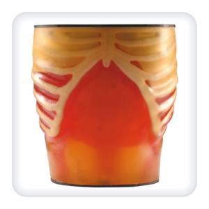 Фантом для отработки навыков УЗИ органов брюшной полости