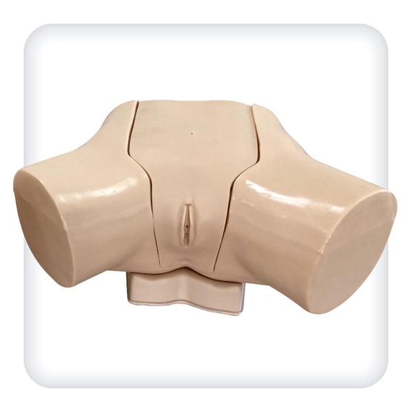 Тренажер для отработки навыков катетеризации мочевого пузыря под контролем ультразвука у женщин